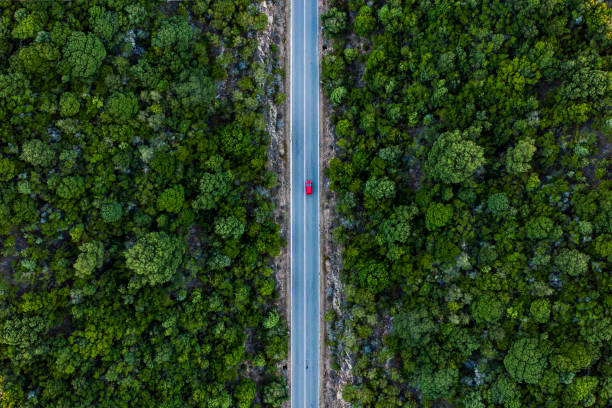 aerial view of a red car that runs along a road flanked by a green forest. - estrada imagens e fotografias de stock