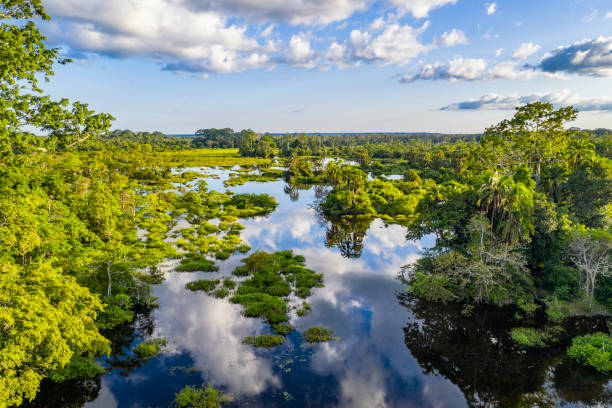Aerial view of a river at a bai clearing in the rainforest, Congo stock photo