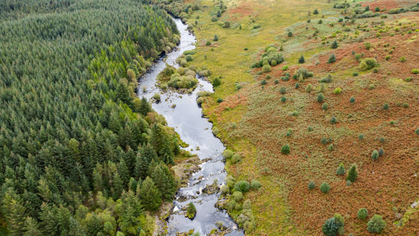 Aerial view of a river flowing through an area of rural Scotland The view from a drone of a slow moving river flowing through the countryside, the location is Dumfries and Galloway. Although it is still summer some of the fern has turned orange. johnfscott stock pictures, royalty-free photos & images