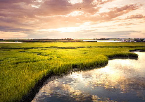Aerial view of a swamp scenery at sunrise