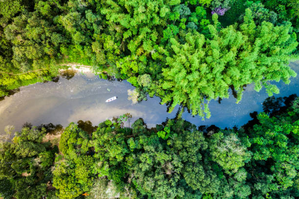 Aerial view of a tropical rainforest Aerial view of a tropical rainforest amazon river stock pictures, royalty-free photos & images