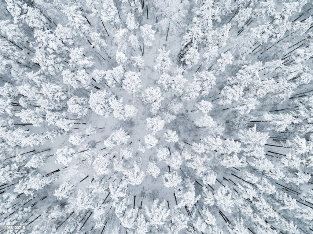 Aerial view of a winter snow-covered pine forest. Winter forest...
