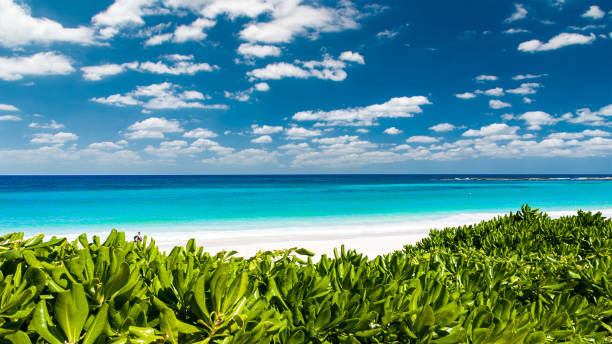 aerial view of a wonderful lonely caribbean beach in Cancun, Mexico stock photo