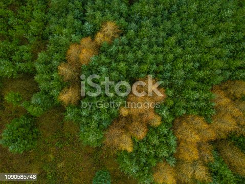 istock Aerial view of a woodland in winter, Roscommon, Ireland. 1090585746