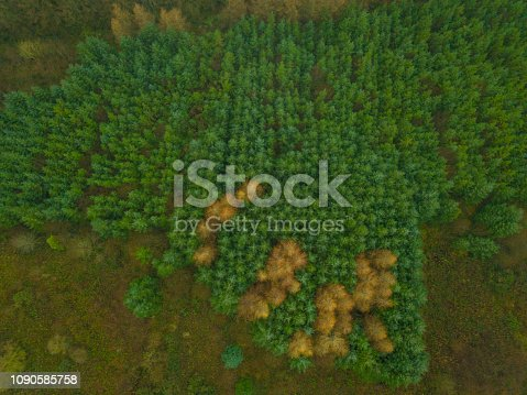 831591456 istock photo Aerial view of a woodland in winter, Roscommon, Ireland. 1090585758
