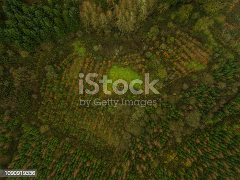 istock Aerial view of a woodland in winter, Roscommon, Ireland. 1090919336