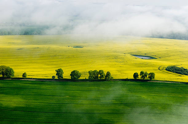 Aerial view of agricultural land in the morning stock photo