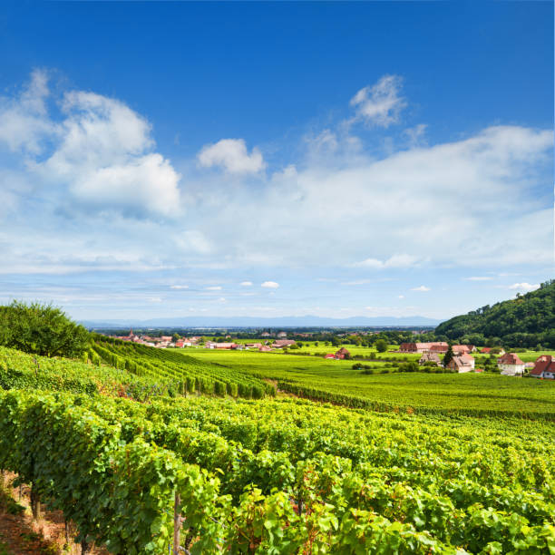 Aerial view of Alsace fruit valley with Kientzheim village in the background - foto stock