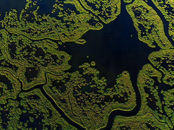 aerial view of amazing natural shapes and textures - mokradło zdjęcia i obrazy z banku zdjęć