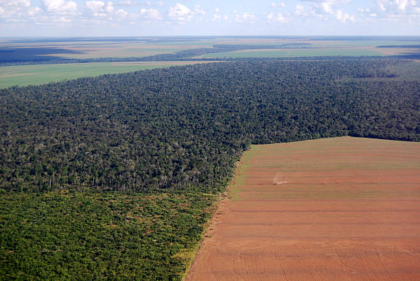 Aerial view of Amazon deforestation in Brazil  amazon stock pictures, royalty-free photos & images