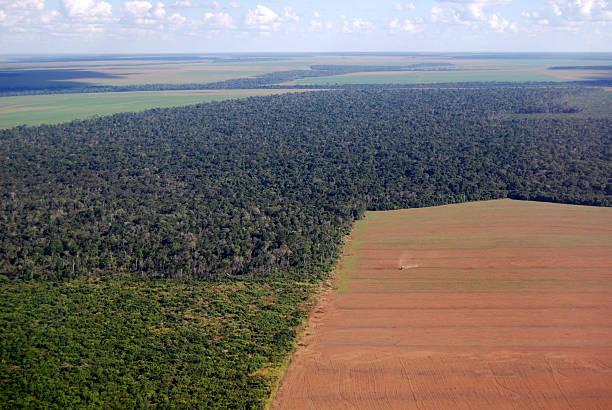 vista aérea de amazon deforestación en brasil - deforestacion fotografías e imágenes de stock
