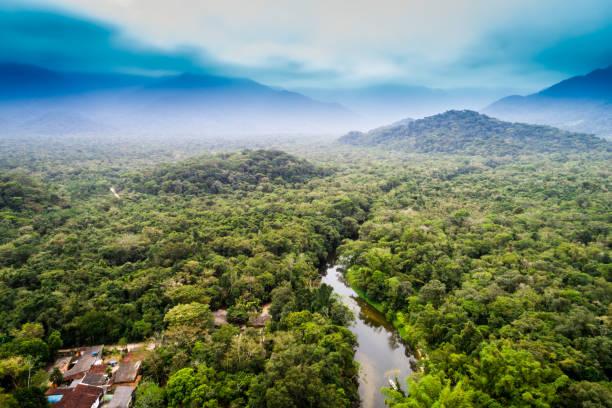 Aerial view of amazon rainforest south america picture id854515924?b=1&k=6&m=854515924&s=612x612&w=0&h=tzjcnl77obufevchupjzncp6qlj b rdm8he854fdro=