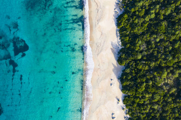 """aerial view of an amazing wild beach bathed by a transparent and turquoise sea. sardinia, italy.""""t - wildlife reserve stock pictures, royalty-free photos & images"""