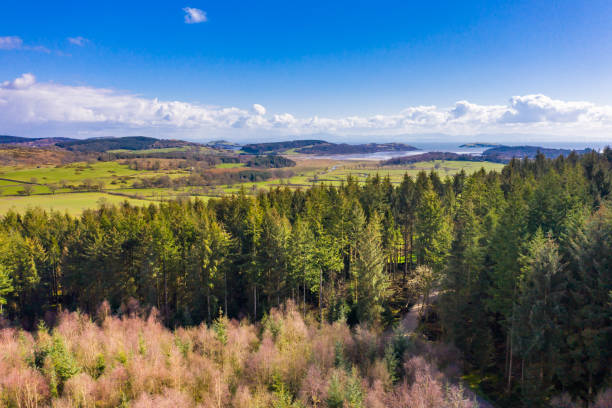Aerial view of an area of pine forest in Dumfries and Galloway. stock photo