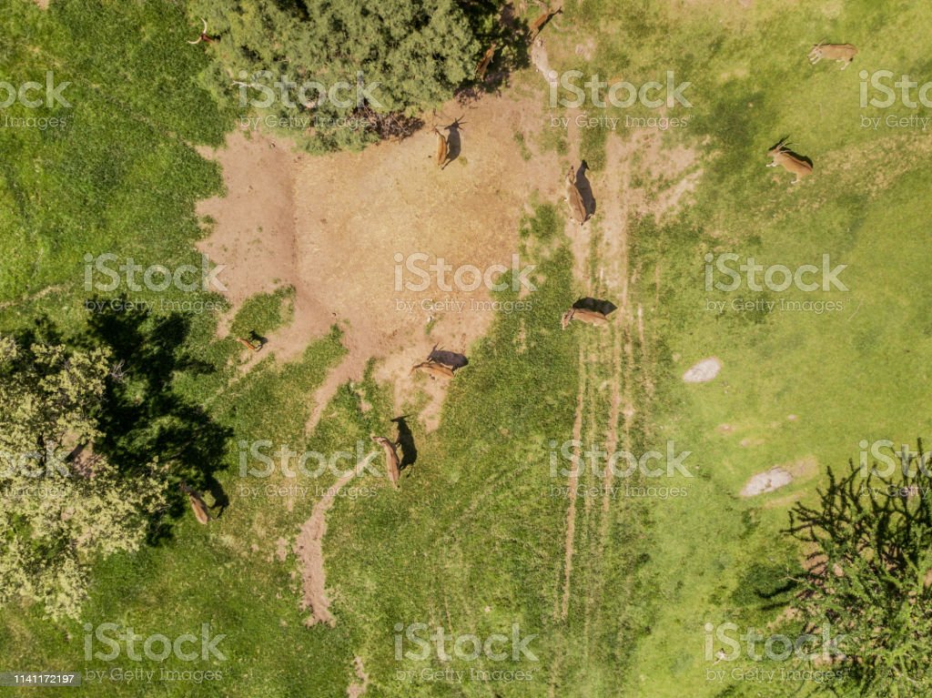Aerial view of animals