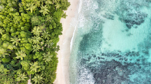 Aerial view of Anse Takamaka -  Mahe Island - Seychelles stock photo