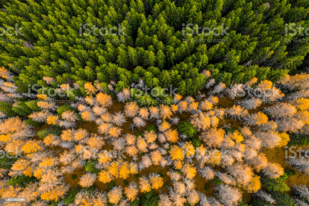 Aerial view of autumn colored forest. Drone shot bird eye. Natural...