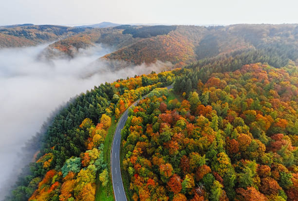 Aerial view of autumn forest road in morning fog. Mosele Valley, Germany. stock photo