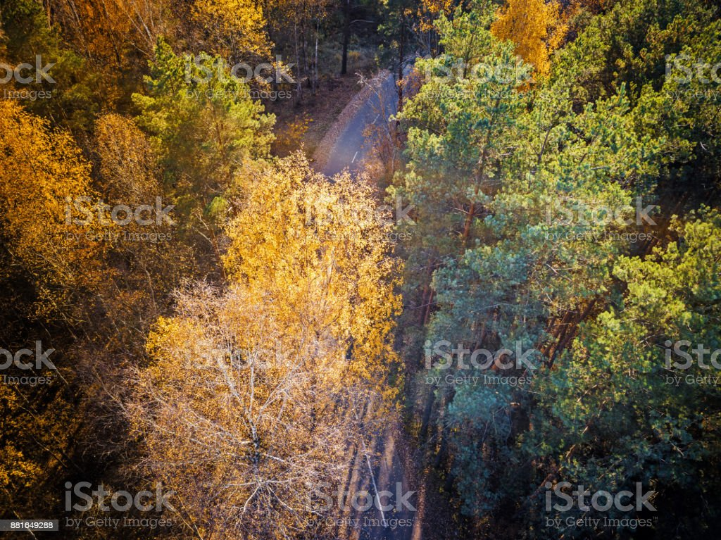 Aerial view of autumn forest with a road. stock photo