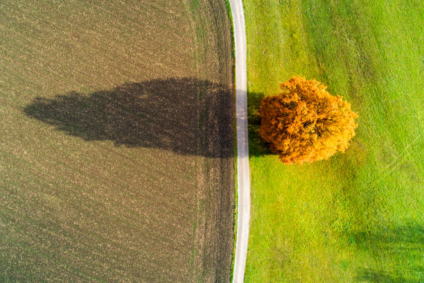 Aerial View of Autumn Tree and Country Road stock photo