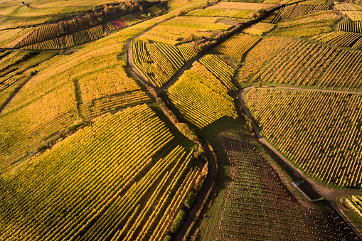 istock Aerial view of autumnal vineyards 630050666