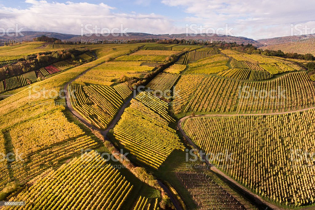 Aerial view of autumnal vineyards stock photo