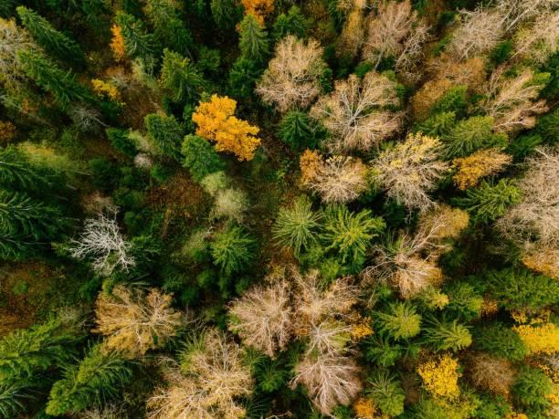 flygfoto över vackra färgglada skogen under hösten - pine forest sweden bildbanksfoton och bilder