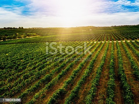 Aerial view of beautiful Vineyard landscape in Greece. Drone photography from above