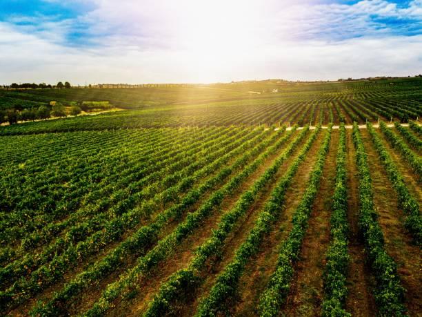 Luftaufnahme der wunderschönen Weinberglandschaft in Griechenland. – Foto