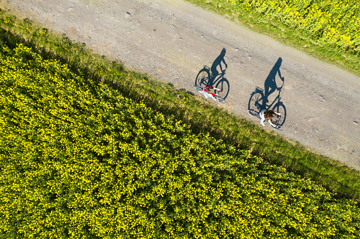 Aerial view of bicycle shadows on the empty asphalt road between rapeseed field