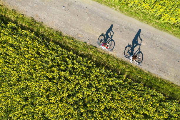 Aerial view of bicycle shadows on the empty asphalt road between rapeseed field stock photo