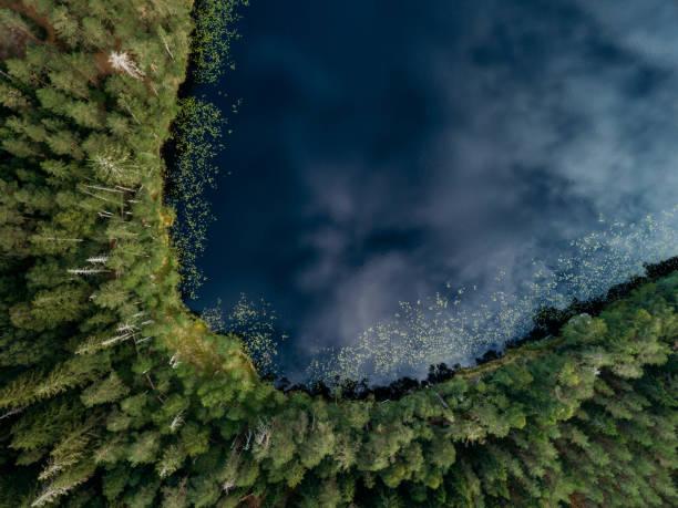 핀란드에서 맑은 여름 날에 푸른 호수와 푸른 숲의 항공 보기 - 핀란드 뉴스 사진 이미지