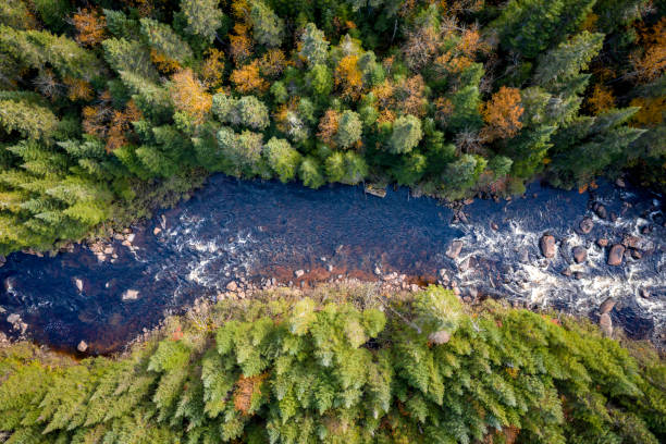 aerial view of boreal forest nature in autumn season, quebec, canada - river stock pictures, royalty-free photos & images