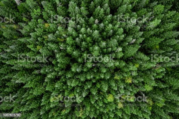 Photo of Aerial View of Boreal Forest Nature in Autumn Season, Quebec, Canada