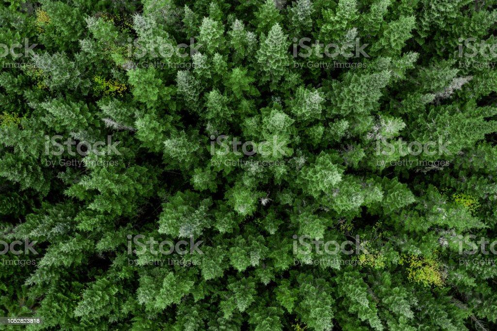 Luftaufnahme des borealen Wald Natur im Herbst Saison, Quebec, Kanada – Foto