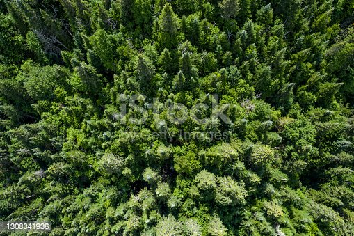 Aerial View of Boreal Forest Nature in Autumn Season, Quebec, Canada
