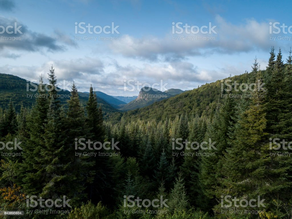Aerial View of Boreal Nature Forest and Mountain in Summer stock photo