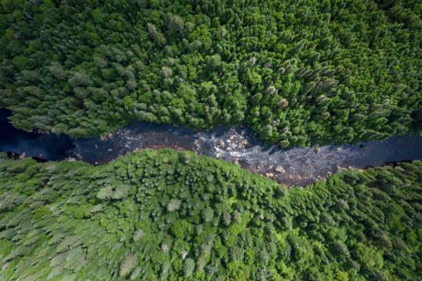 Aerial View of Boreal Nature Forest and River in Summer stock photo