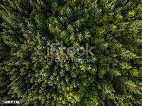 istock Aerial View of Boreal Nature Forest in Summer 843895410