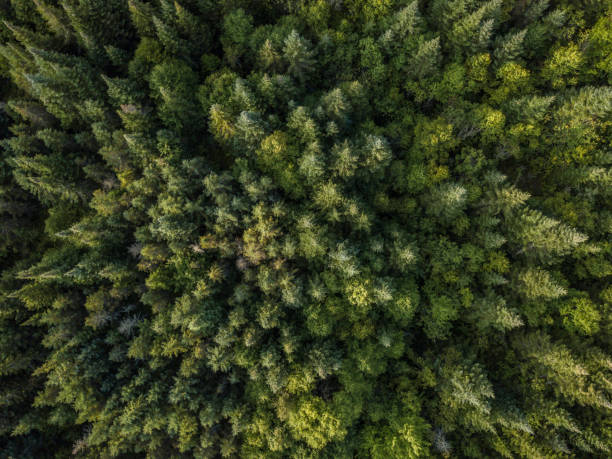 Aerial View of Boreal Nature Forest in Summer 4k UHD Video of an Aerial view of a boreal forest in Quebec, Canada in summer taiga stock pictures, royalty-free photos & images