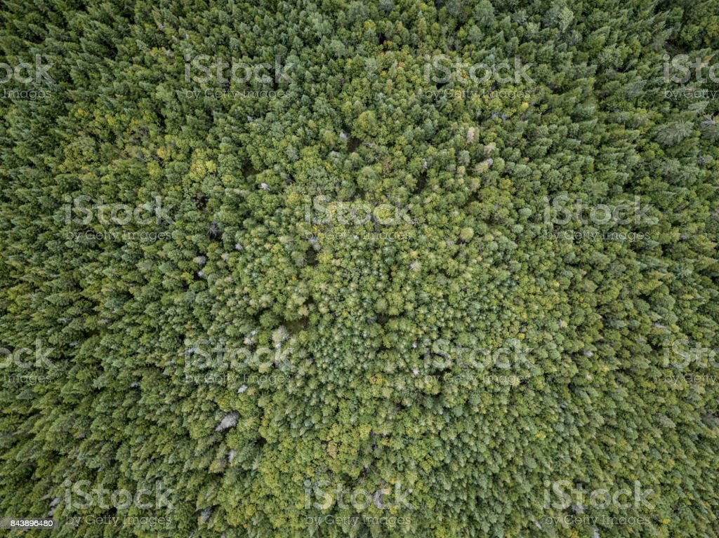 Aerial View of Boreal Nature Forest in Summer stock photo