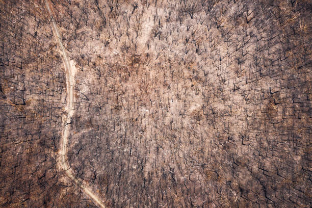 Aerial view of burnt out destroyed forest with dirt road stock photo