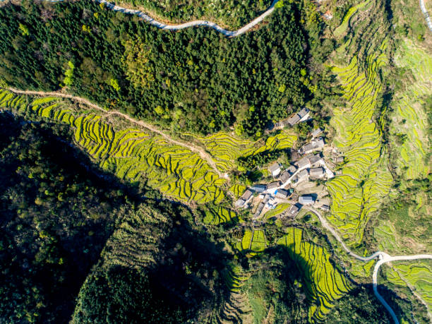 Luftaufnahme der Raps-Feldkurve bei Jiangling, China. – Foto