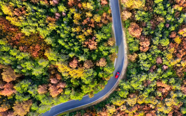 Aerial view of car on a winding road through the forest.