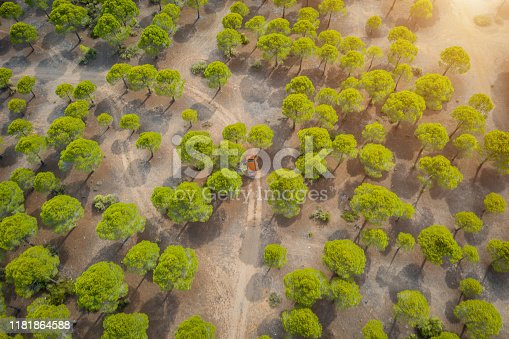 1061550162 istock photo Aerial view of car on winding forest road in wilderness 1181864588