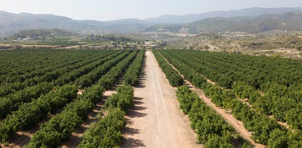 luftaufnahme von zitrusfrüchten - wäldchen stock-fotos und bilder