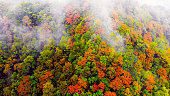 Aerial view of colorful forest in autumn