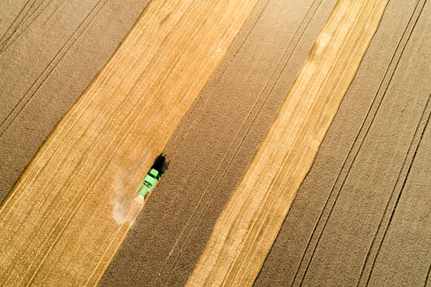 Aerial view of combine harvester harvesting wheat in field stock photo