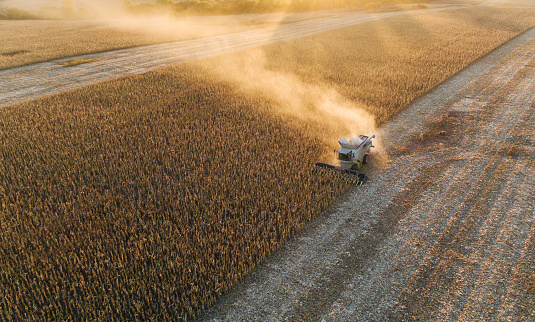 Aerial view of combine harvesting corn fields at sunset.