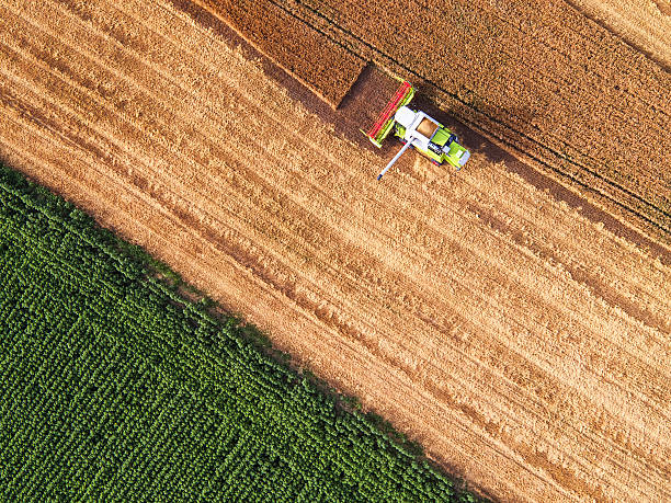 Aerial view of combine on harvest field stock photo